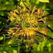 Orchid-Star_-_Wildflower_-_Polynectar_Remix_(